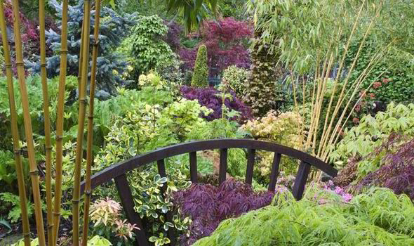With A Little Imagination You Can Transform Muddy Puddle Into An Exciting Planting Opportunity
