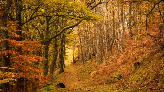 Uk S 20 Best Autumn Walks From Hiking In The Hills To