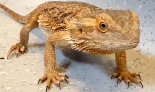 9 Insects To Feed Your Bearded Dragon For Optimum Health