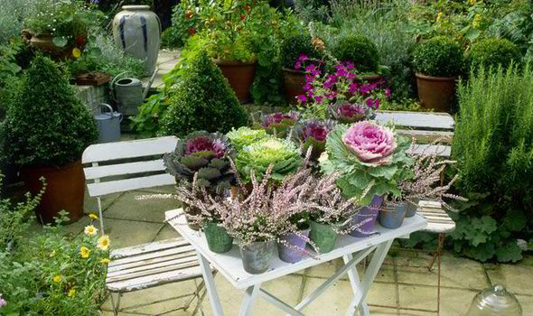 Alan Chmarsh Tips Colourful Autumn Garden Container Ornamental Cabbage