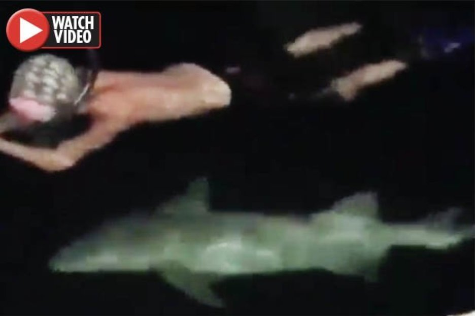 Sharks follow oblivious diver at night in terrifying video - Daily Star