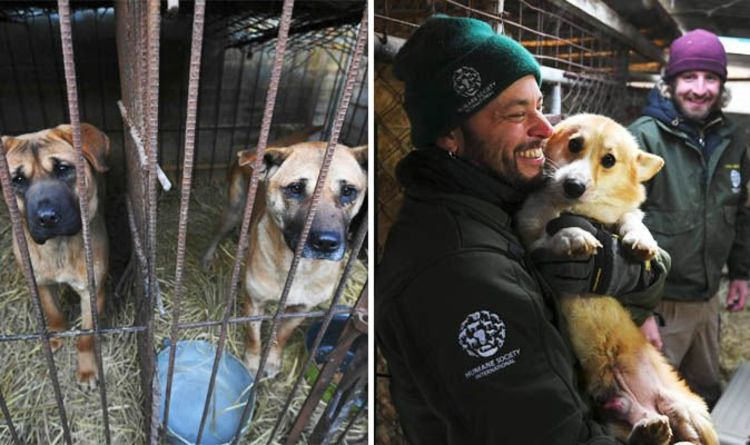 South Korea dog meat trade: Charity rescues 200 pups from