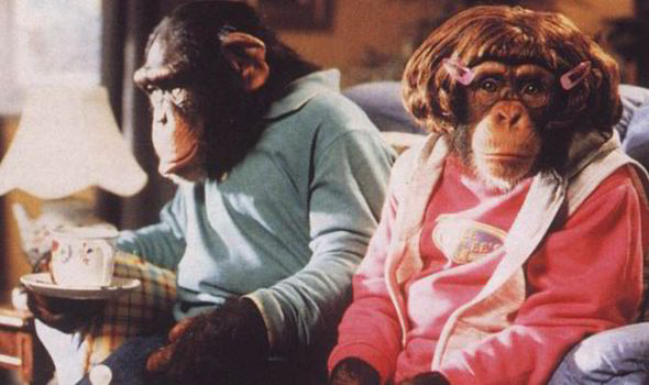 Image result for pg tips chimpanzee