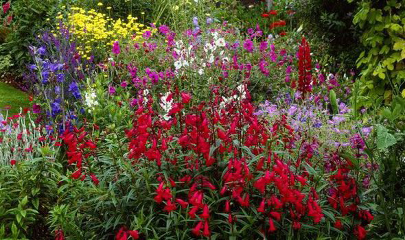 Garden Tips Penstemons Summer Perennials Alan Chmarsh