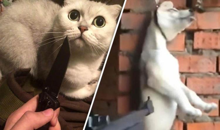 Animal cruelty: Russian girls filmed torturing and killing