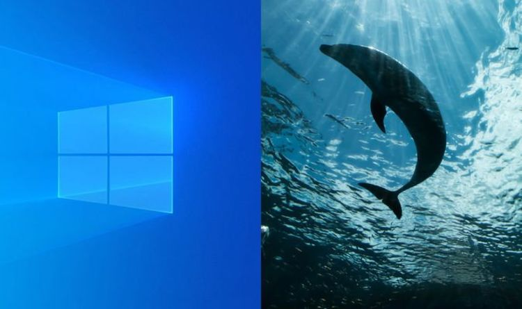 Windows 10 background pictures: How to use Windows 10