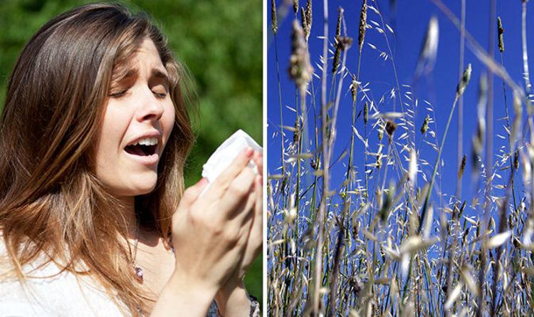 pollen count bishops stortford