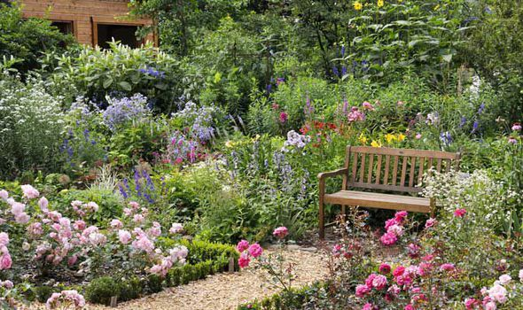 Alan titchmarsh on growing rose shrubs in your garden express forget high maintenance hybrid teas select easy modern shrubs for the perfect darling buds mightylinksfo