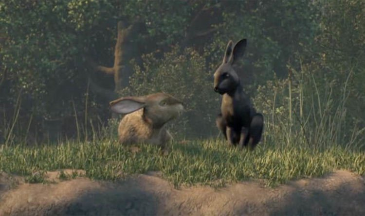 Image result for watership down black rabbit