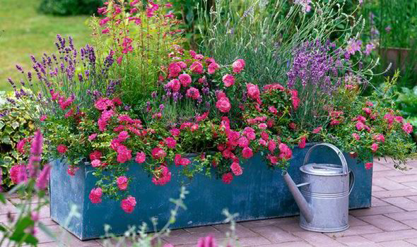 Alan Titchmarsh On Colourful Garden Plant Containers Express