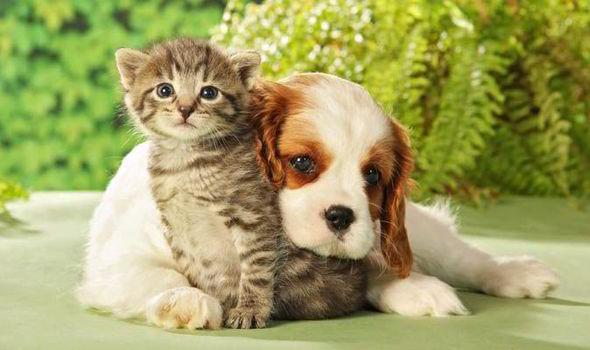 Cute Kitten And Dog