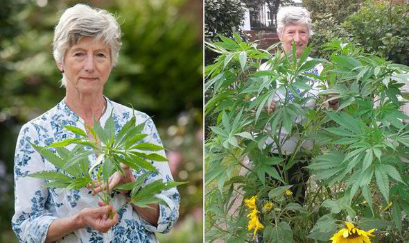 Charming A PENSIONER Who Contacted A BBC Gardening Show To Identify A Mysterious 5ft  Weed In Her Garden Was Stunned To Discover It Was A Cannabis Plant.