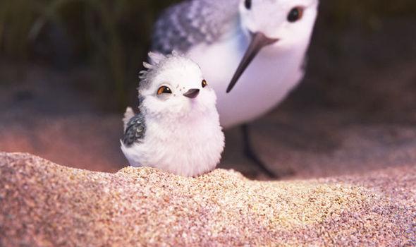 piper pixar short film download
