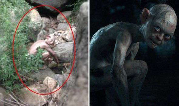 Man Takes Picture Of Gollum Like Creature But Actor In Sci Fi Movie