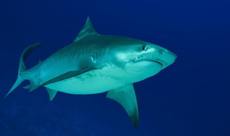 9dec3c04ac3 Shark attack: Beaches in Hawaii closed after woman is hospitalised ...