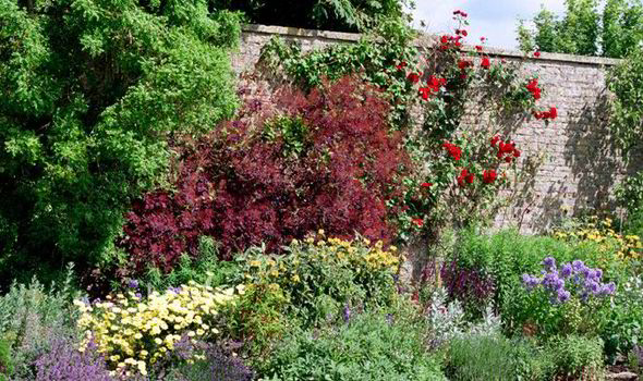 Alan Titchmarsh on growing plants against a wall | Express co uk