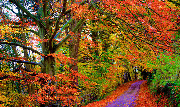 wet summer means glorious display of autumn leaves predicted