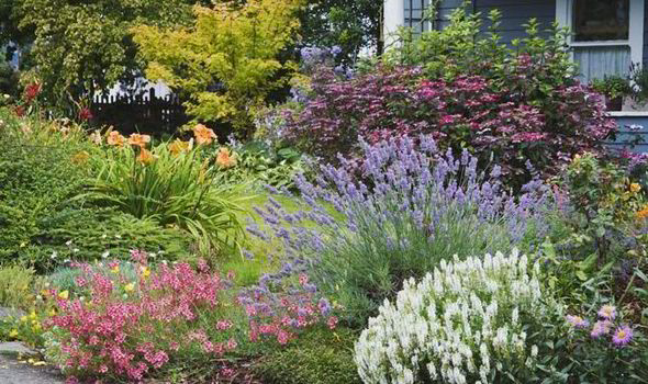 cool plants for hot gardens