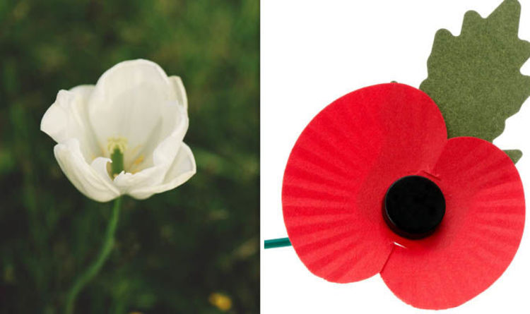 Remembrance Day 2018 What Are White Purple And Gold Poppies What
