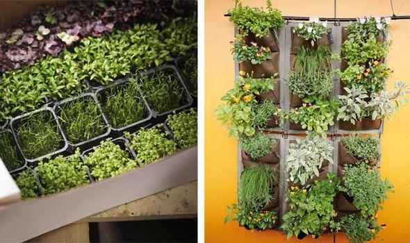 Attrayant Alan Titchmarsh, Garden, Tips, Grow, Herbs, UploadExpress