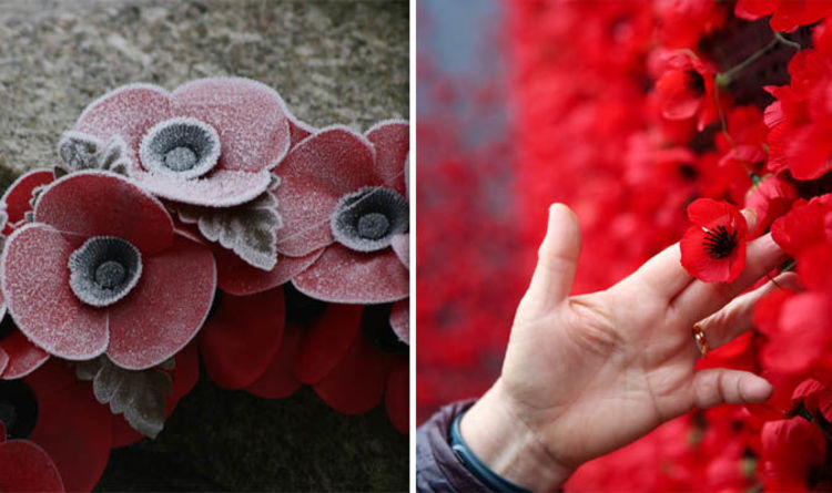 Remembrance Day 2018 What Are The Best Poems And Quotes For