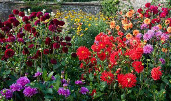 Incroyable Dahlia, Titchmarsh, Dream Gardens, Horticultural, Best Garden Tips,