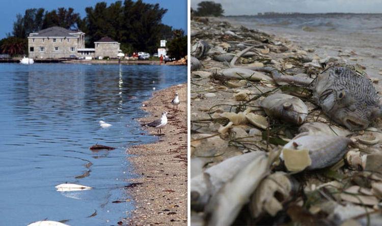 Florida News Toxic Red Tide Hits Florida Coast Blue Green Algae