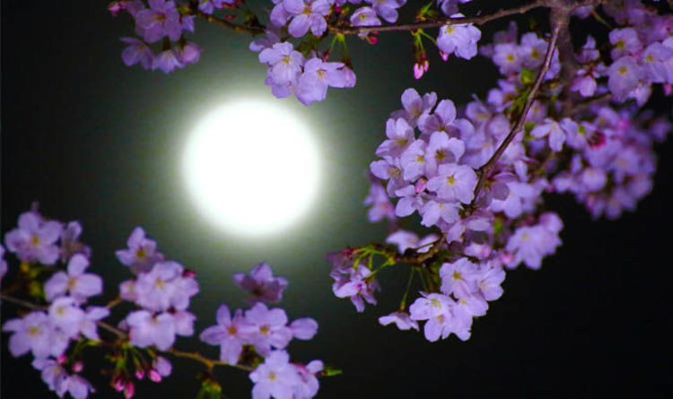 Flower Moon 2018 Spiritual Meaning What May Full Moon Means For You