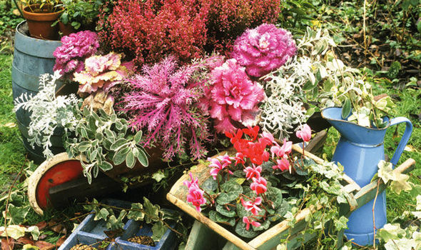 Alan Titchmarshs Tips On All Year Round Planting Expresscouk
