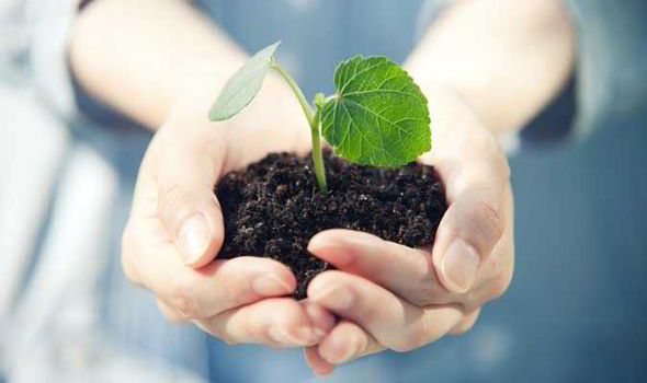 Alan Titchmarsh tips on selecting the perfect compost