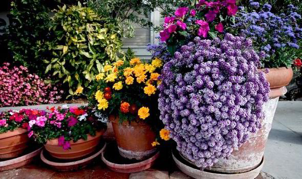 Larger Containers Will Last Longer And Grow Much Better Plants