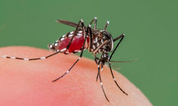 Why are my mosquito bites swelling up? Your holiday health