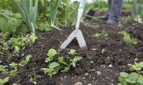 garden weeds - Garden Weeds