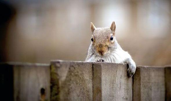 Alan Titchmarsh, garden, wildlife, tips, winter