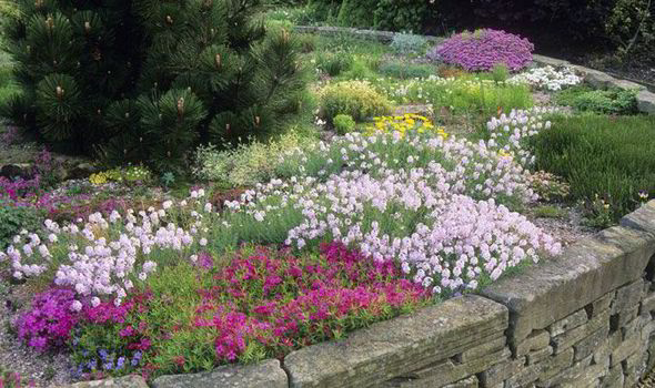 Want Colour In Your Borders From Now Til September Plant Phlox Says Alan Chmarsh