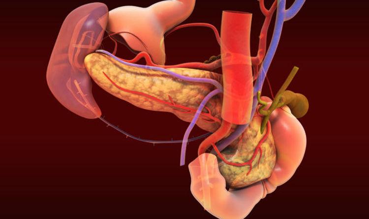 New Human Organ Mesentery To Treat Digestive Diseases Found