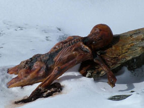 ancient iceman may have carried his own first aid kit uk news