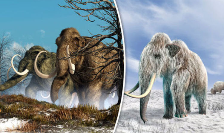 Wooly Mammoths Could Rise From The Dead In Breakthrough Cloning
