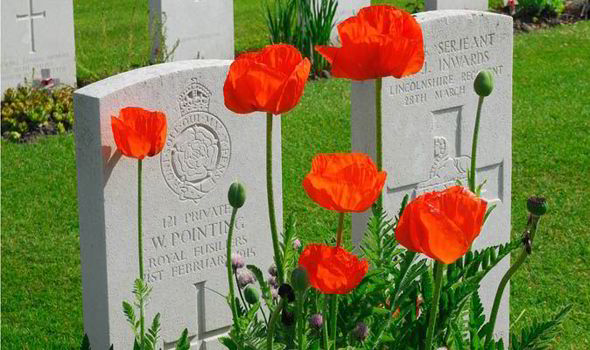 First World War Tribute Grow Your Own Poppies To Mark 100 Years