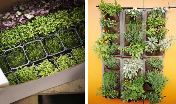 Alan Chmarsh Garden Tips Grow Herbs Uploadexpress