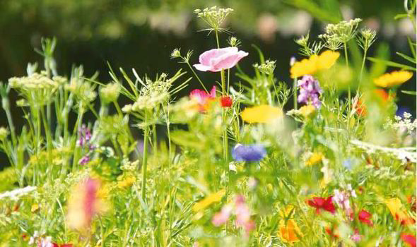 the flowers in our meadows and woods tell a fascinating tale of how the british landscape evolved over millions of years says alan - English Flowers Garden