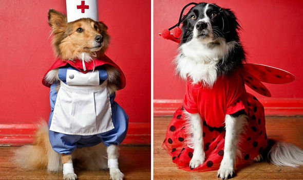 Cute animal pictures  Dogs dress up for canine fancy dress  89caa62d9