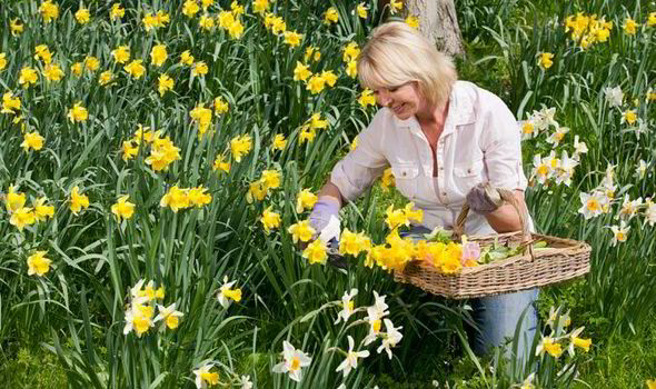 September Is The Best Month For Planting Spring Bulbs Getty