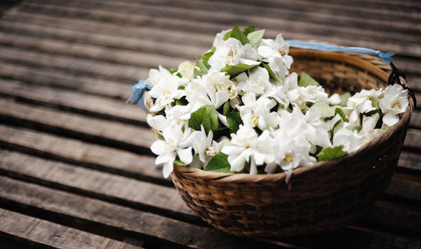 ae7541042dd Heady aromas  Alan Titchmarsh on growing Jasmine in your garden