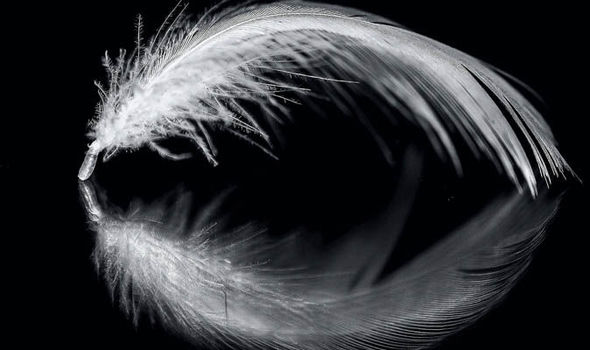 Angel Expert Says White Feathers Are A Sign From Beyond To Offer