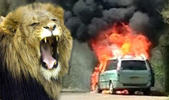 1 Episode 11 Into The Lion S Den