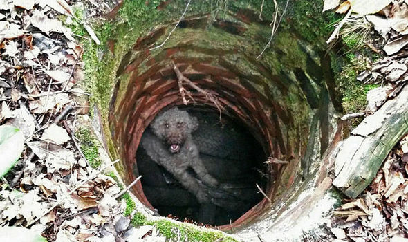 a dog trapped in a well for 17 hours has been rescued uk news