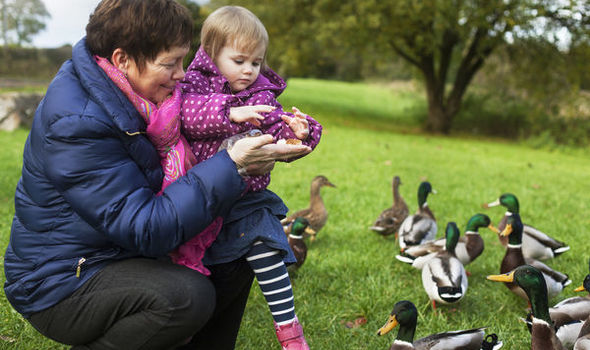 Don't feed the ducks these six things including BREAD