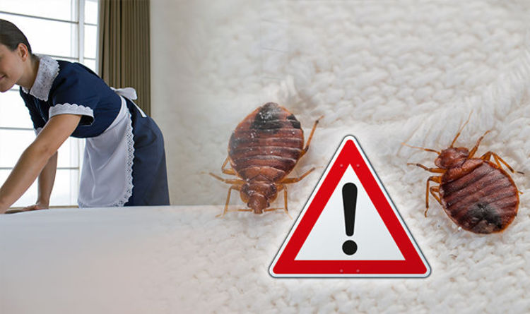 Bed Bug Signs To Look Out For When Staying In A Hotel Travel News Express Co Uk