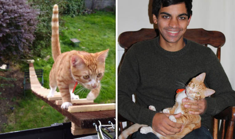 Cat Ladder Created By Oxford Student Tariq Khoyratty After Landlord